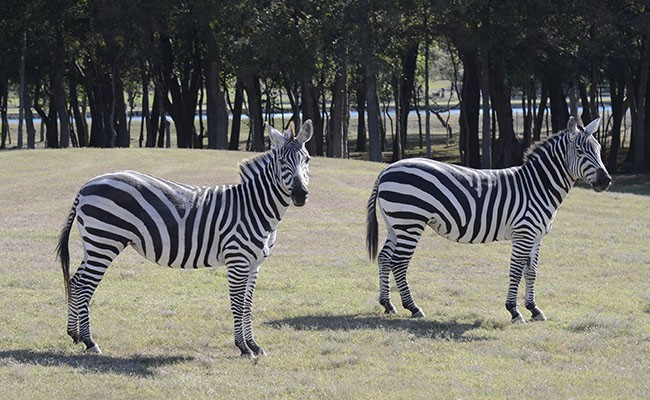 Top Fun Ranch: Exotic Animals for Sale